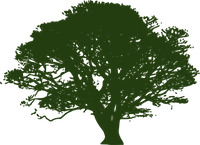 Picture of a hand drawn tree all in green for our logo in greenville, NC