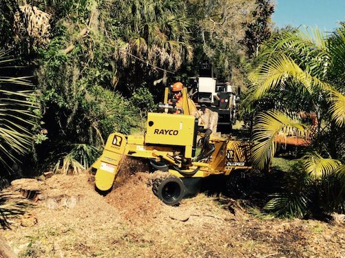 Picture of our stump grinder being used to remove a very large stumpr for a customer in greenville, nc